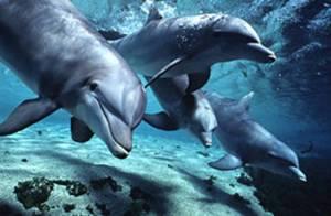 Tenerife Underwater Dolphins